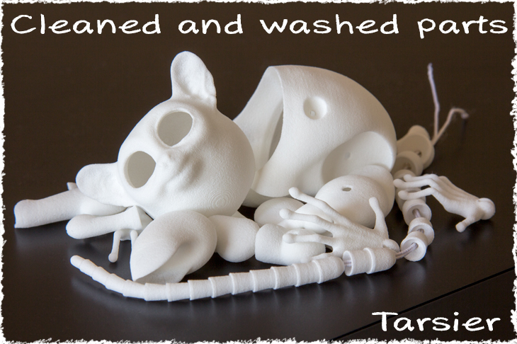 cleaned and washed parts of the ball-jointed Tarsier