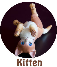 Full information about 3D printed BJD Kitten
