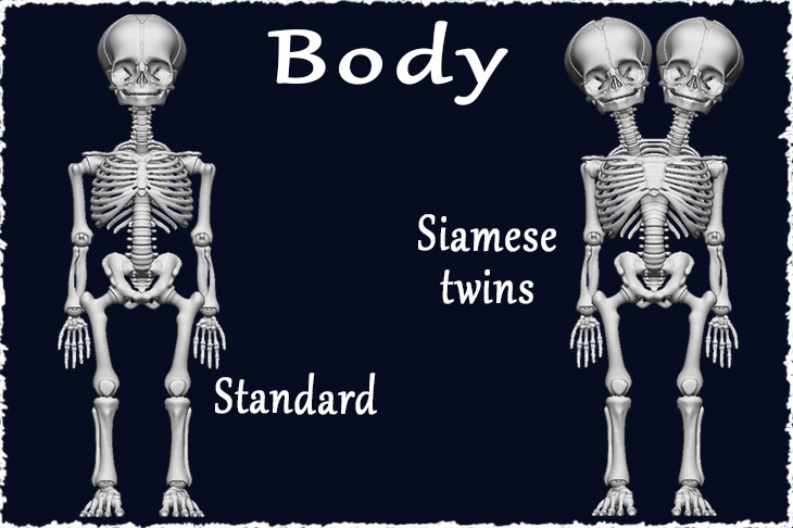 Standard and Siamese twins bodies are available for skeletons.
