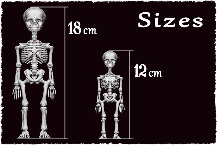 2 sizes are available for BJD Skeleton. 12 cm and 18 cm